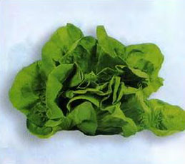 кочанный салат